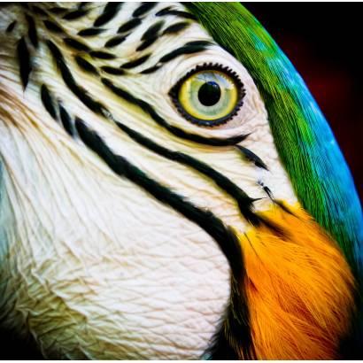 Фотообои Попугай | арт.16317