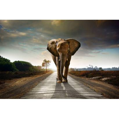 Фотообои Слон, шагающий по шоссе | арт.16325