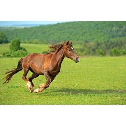 Фотообои Скачущая лошадь | арт.16326