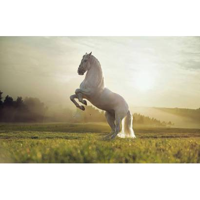 Фотообои Белый конь | арт.16327