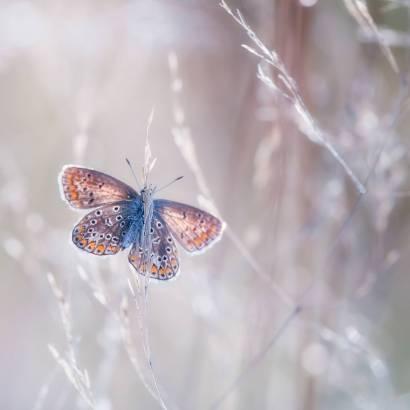 Фотообои Бабочка | арт.16331