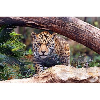 Фотообои Леопард | арт.16332