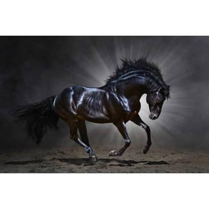 Фотообои Вороной конь | арт.16334