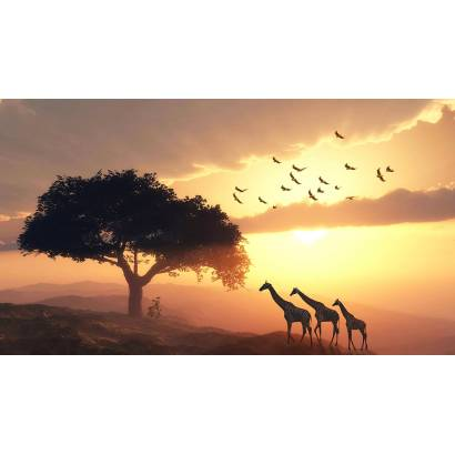 Фотообои Африканский закат | арт.16336