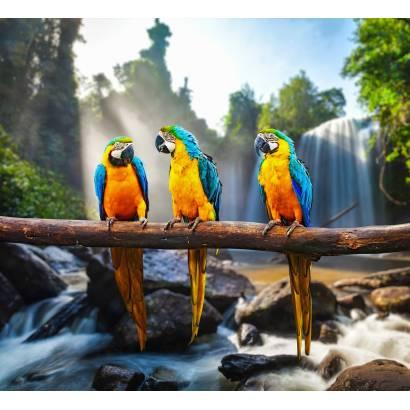 Фотообои Попугаи | арт.16338