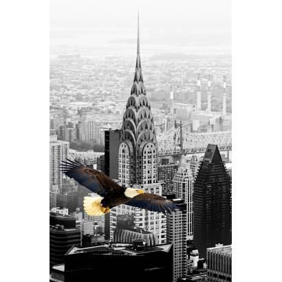Фотообои Орел над Нью-Йорком | арт.16340