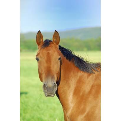 Фотообои Лошадь | арт.1642
