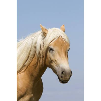 Фотообои Лошадь | арт.1646