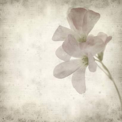 Фотообои Цветок | арт.1721