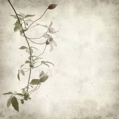 Фотообои Цветочная ветвь | арт.1728