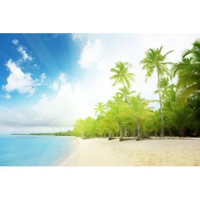 Фотообои Пальма у моря | арт.21130