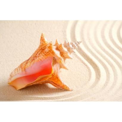 Фотообои Ракушки У Моря | арт.21165