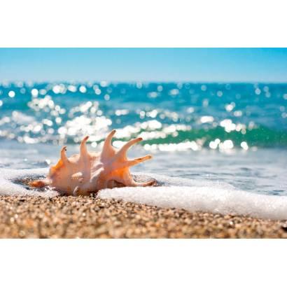 Фотообои Ракушки У Моря | арт.21170