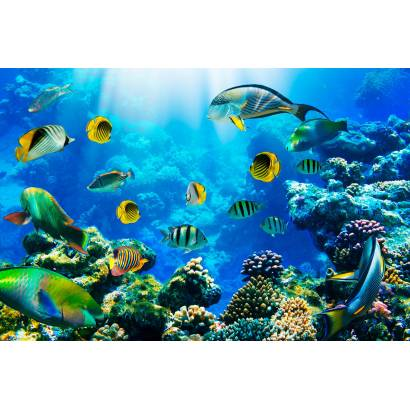 Фотообои Морская Жизнь | арт.21179
