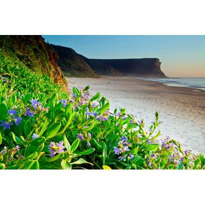 Фотообои Горные цветы на берегу моря | арт.21231