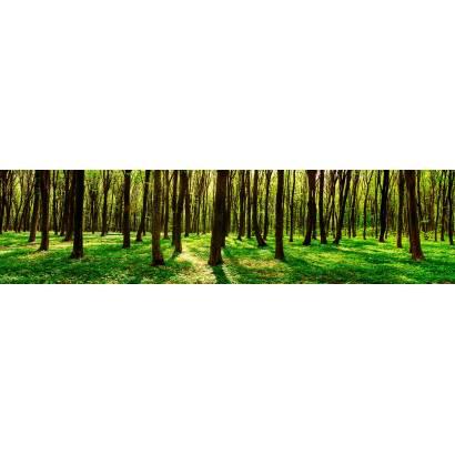 Фотообои Зеленый лес | арт.2271