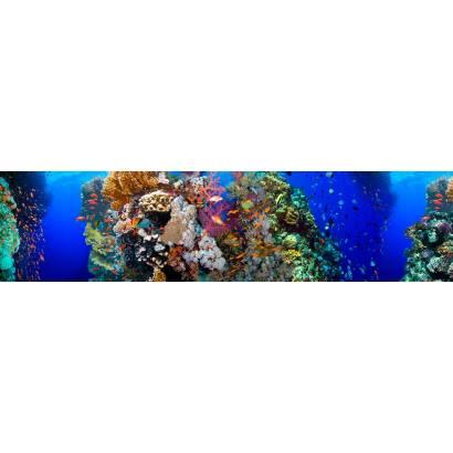 Фотообои Подводный мир | арт.2279