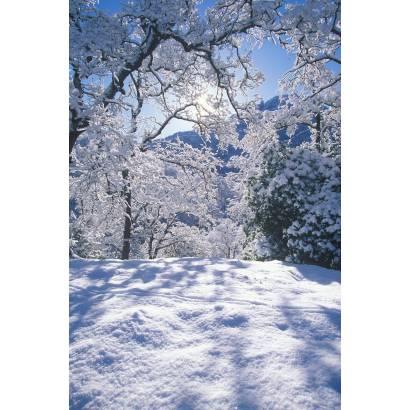 Фотообои Зимний Лес | арт.23160