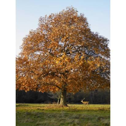 Фотообои Дерево | арт.23161
