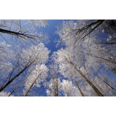 Фотообои Зимний Лес | арт.23169