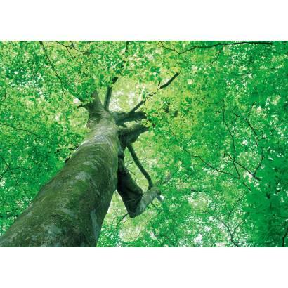 Фотообои Дерево | арт.23170
