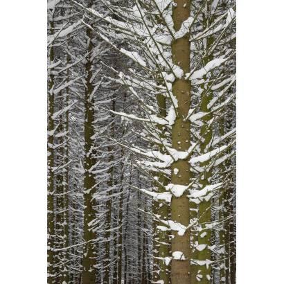 Фотообои Зимний Лес | арт.23214