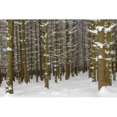 Фотообои Зимний Лес | арт.23216