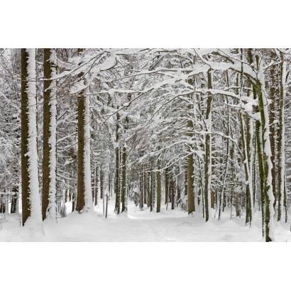 Фотообои Зимний Лес | арт.23217