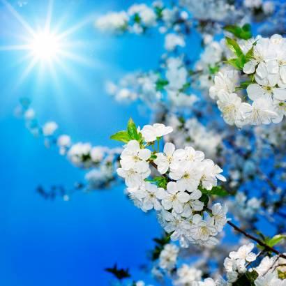 Фотообои Яблочный Цвет | арт.23224