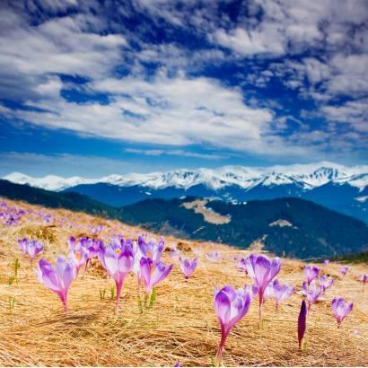 Фотообои Цветы В Горах | арт.23227
