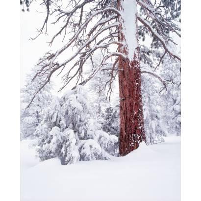 Фотообои Зимний Лес | арт.23236