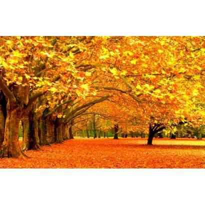 Фотообои Осень | арт.23238