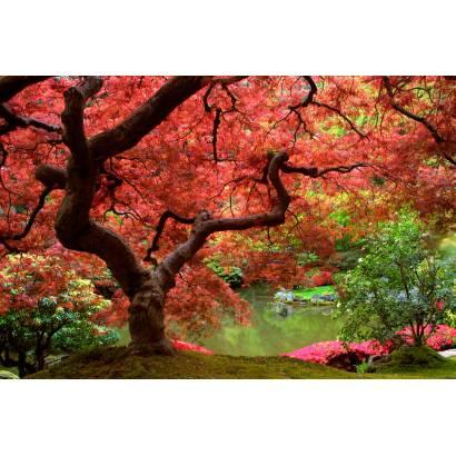 Фотообои Осень | арт.23239