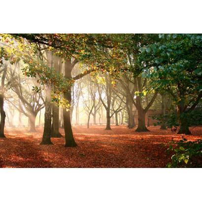 Фотообои Осенний Парк | арт.23241