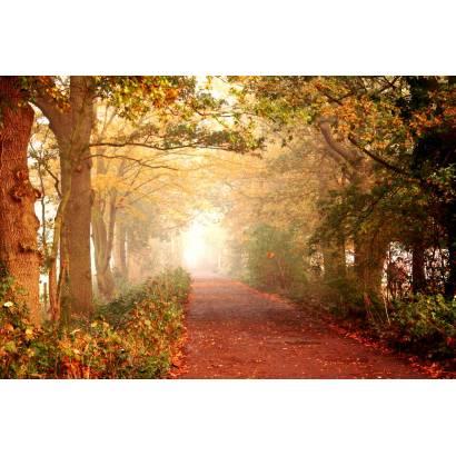 Фотообои Осенний Парк | арт.23249