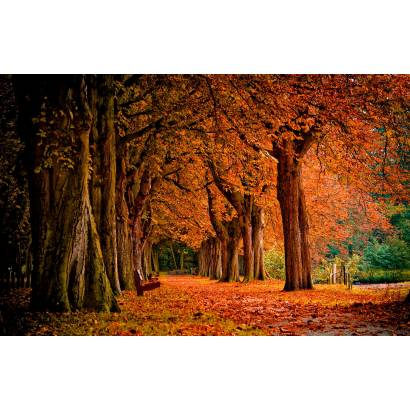 Фотообои Осень | арт.23263