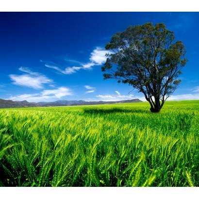 Фотообои Дерево В Поле | арт.23275
