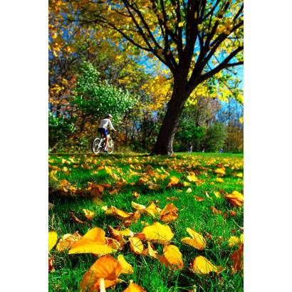 Фотообои Велосипедист | арт.23284