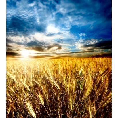 Фотообои Пшеничное Поле | арт.23308