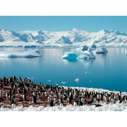 Фотообои Пингвины   арт.23315