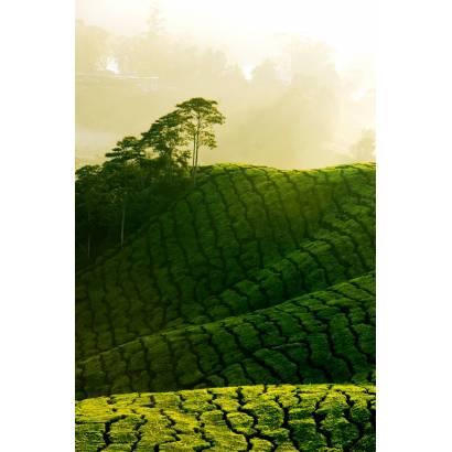 Фотообои Чайные Поля | арт.23320