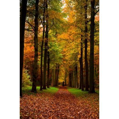 Фотообои Осенний Парк | арт.23327