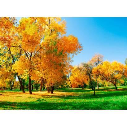 Фотообои Осенний Парк | арт.23333