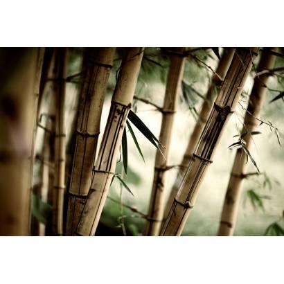 Фотообои Бамбук | арт.23345