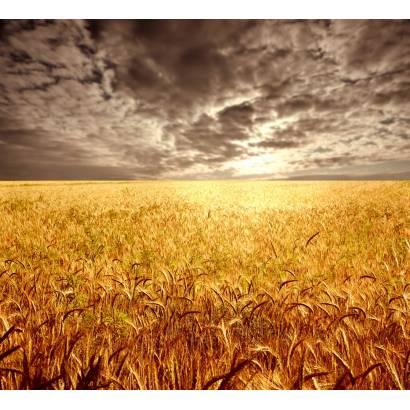 Фотообои Пшеничное Поле | арт.23356