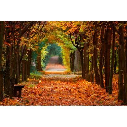 Фотообои Осенний Парк | арт.23360