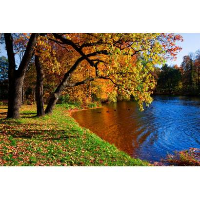 Фотообои Осень | арт.23375