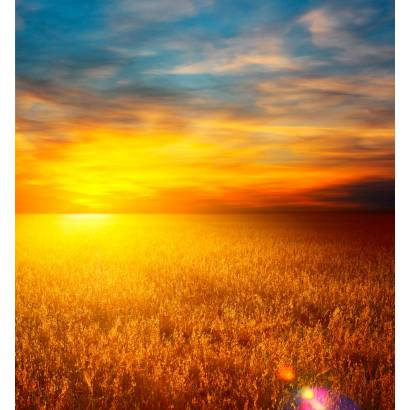 Фотообои Пшеничное Поле | арт.23384