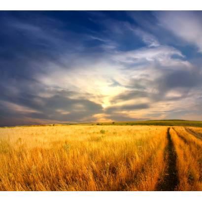 Фотообои Пшеничное Поле | арт.23386