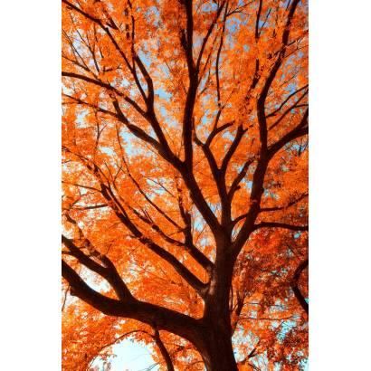 Фотообои Осень | арт.23396